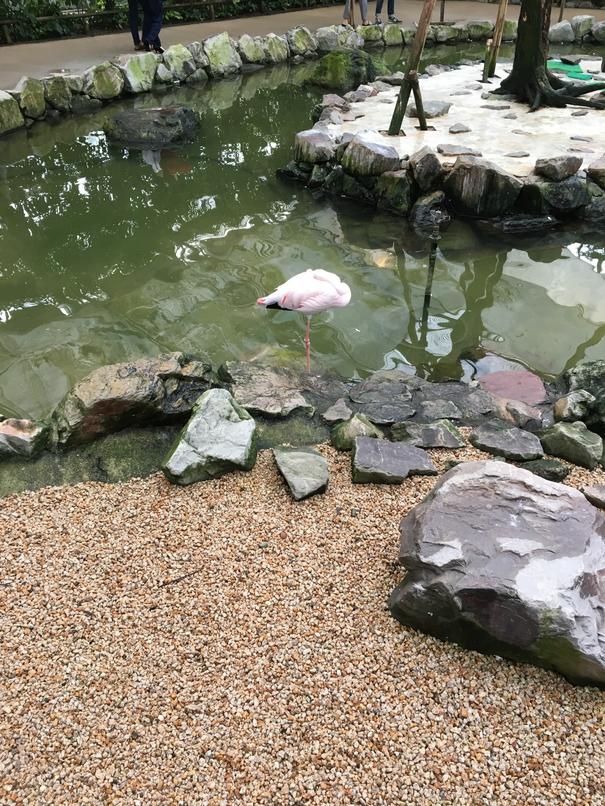 松江フォーゲルパーク2