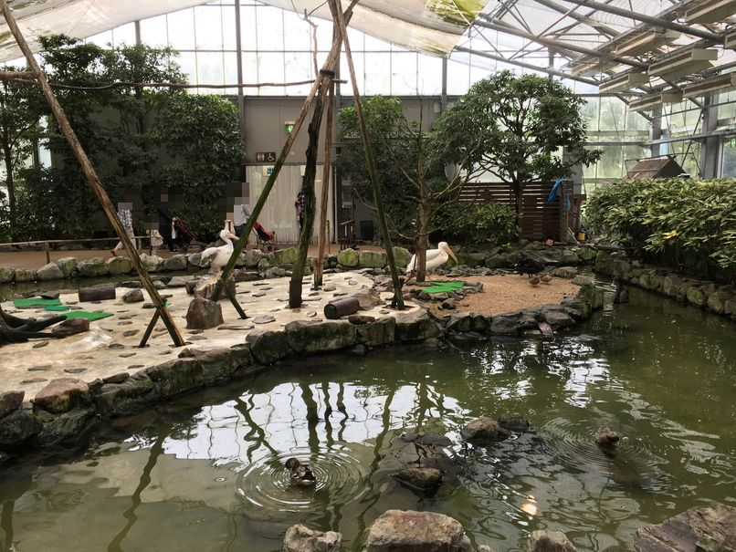【島根・鳥取旅行その8】松江フォーゲルパーク
